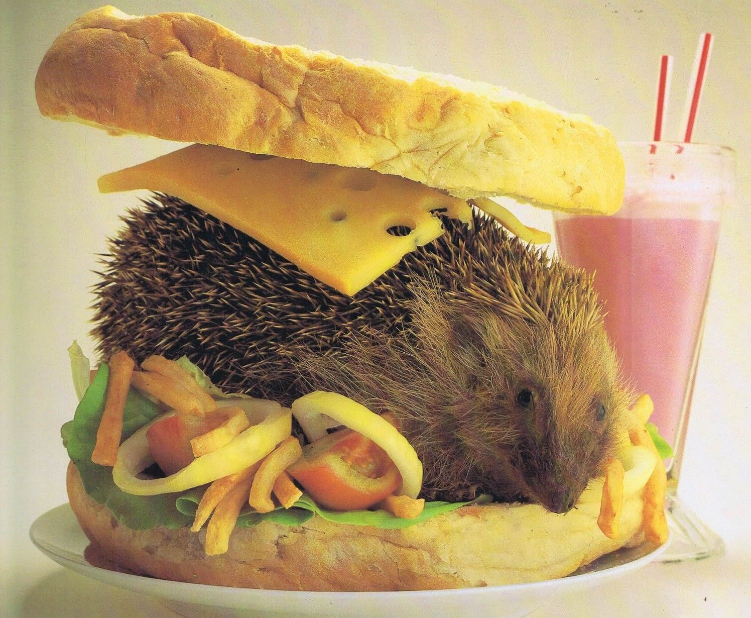 Hedgehog-Sandwich.jpg